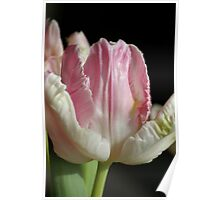 The Pink parrot Tulip Poster