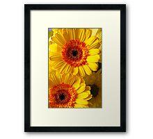 Two Yellow Orange Mums Framed Print