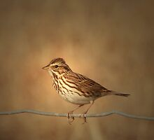 Bird on a Wire by SetterSmiles