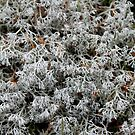 'Lichen in Acadia' by Scott Bricker