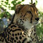 Cheeta  by Travis Graham