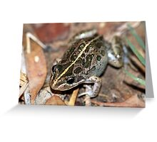 Spotted Marsh Frog Greeting Card