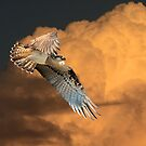 Sunset Flight by byronbackyard