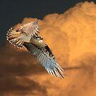 Sunset Flight by byronbackyard