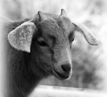 Little Billy Goat  by Danielle Espin