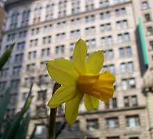 Narcissus in Manhattan by Nella Khanis