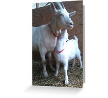 Goat Kisses Greeting Card