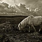 Grazing the Moors  by Rob Hawkins