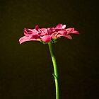 Flower 4 by Daniel Pritchard