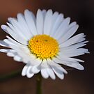 Daisy II by vbk70