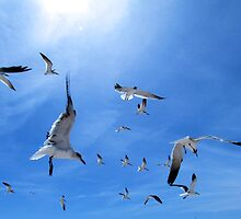 Skimmers, and Seagulls, and Terns; Oh My! by Judy Wanamaker