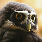 Spectacled Owl by Mark Tomlinson