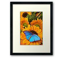 Blue Butterfly On Sunflower Framed Print