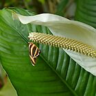 Tiger Butterfly and Peace Lily by Joy Fitzhorn