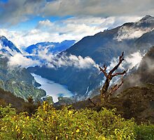 Doubtful Sound by Bill  Robinson