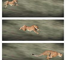 Cheetah frames by markbeckwith