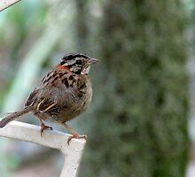 World´s cutest bird by arthurpf