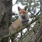 The Red TreeFox by DutchLumix