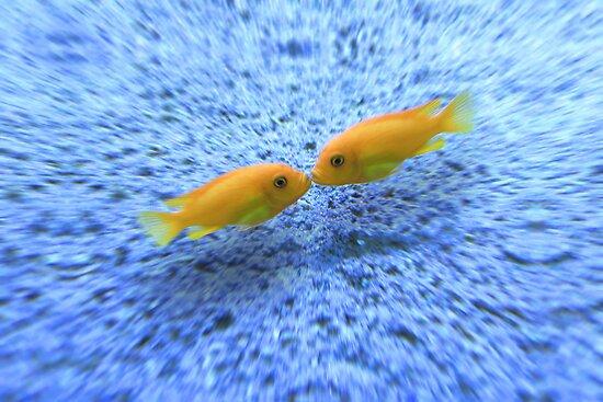 Kissing Fishes by Nasko .