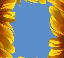 Sunflower frame by Nasko .