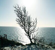 Tree Sea Sun Snow by Barnewitz