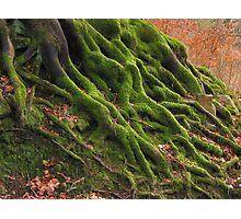 Tree roots Photographic Print