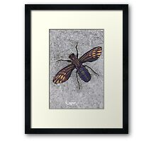 074 - FLY (Ink and coloured pencils) - 1998 Framed Print
