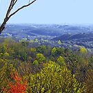 Spring Greening in the Mountains by Kate Eller