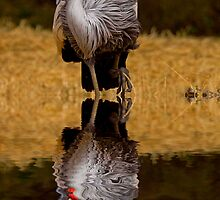 East African Crowned Crane #2 by LucyAbrao
