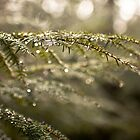 Dew by MrRoderick