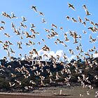 White Galahs in Flight I by savaggio