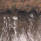 Willow Reflections on the Derwent by Deane Radcliffe