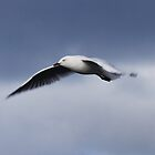 Fly With Freedom - Seagull by Fayth
