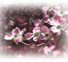 The Legend Of The Dogwood (Please view large) by rasnidreamer