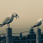 Seagull Chorus by pennyswork