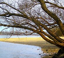 Sand.pad on Danube river_county Pest,Hungary,2011March by ambrusz