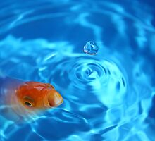 Goldfish in blue bowl by markbeckwith