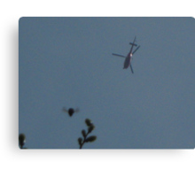 Lucky snap of humble bumble whilst taking photo of 3 bladed helicopter. Canvas Print