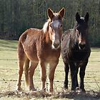 Two Mules Are Better Than One by Sheri Bawtinheimer