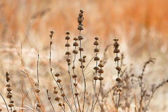Dry Wild Flowers and Weeds by Daniel Ray Thibodeaux