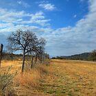Fence Line by Daniel Ray Thibodeaux