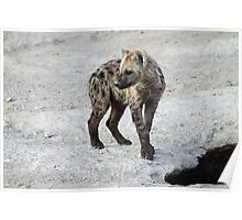 Spotted Hyena Cub, Kenya.  Poster