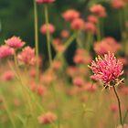 Riverbanks Botanical Garden - Pink Flower by emmacolleen