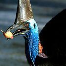 Take a bite - Etty Bay Cassowary by Jenny Dean