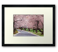 Canopy of Blossoms Framed Print
