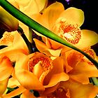 Orange Orchids by danielmarcus