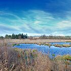 Dirt Road Swamp Panorama by Penywise