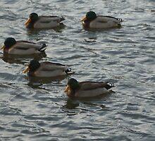the village ducks by rue2