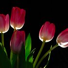 Twirler's Tulips by Bruce Guenter