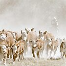 Bringin' in the Herd by gwestbro